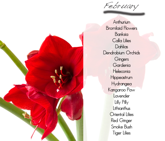 What flowers are available in season february for Flowers in season in february